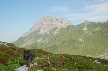 Lady in den Alpenrosen