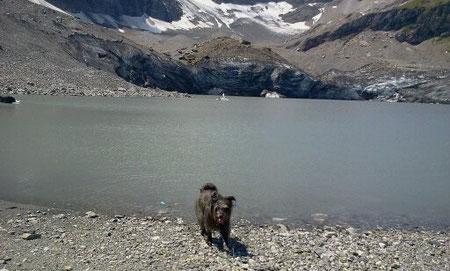 Lady nimmt ein Bad im Gletschersee