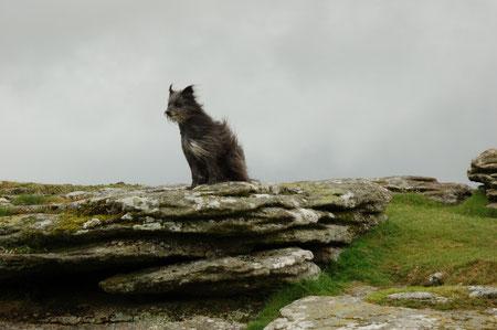 Wanderung Fur Tor - es windet stark