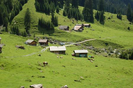Blick hinunter auf Kühe und Alp Äsch