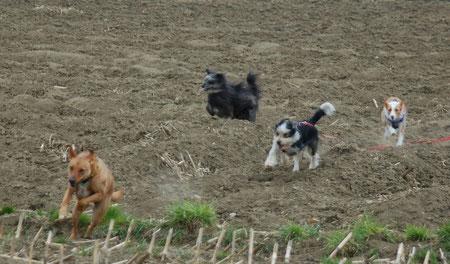 das Spielen und Rennen der Hunde kam nicht zu kurz