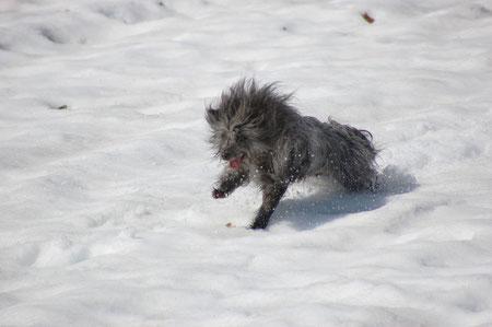 Lady rast im Schnee