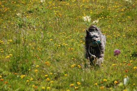Lady rennt in Alpenwiese