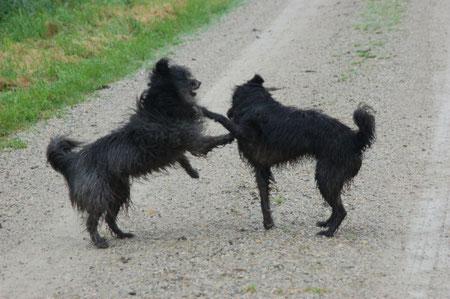 Lady und Ronja beim Spielen