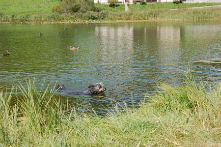 Lady schwimmt tatsächlich