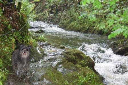 Lady auf dem Felsenweg entlang dem Fluss in der Schlucht