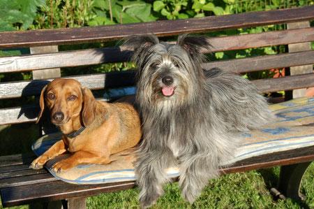 Lady und Benno