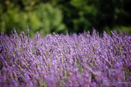 endurance équestre en Provence : Revest du Bion