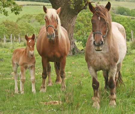 La famille cheval prenant la pause