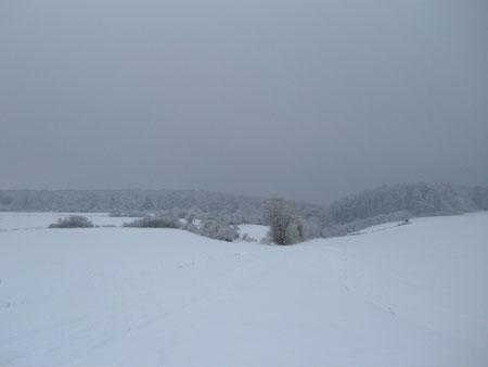 Ellenser Wald ,Schnee ,Winter 2010