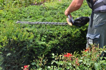 Gartenarbeiten Heckenschneiden