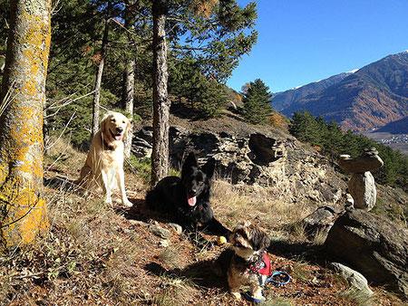 ...mein Hunderudel im Nov. 2012
