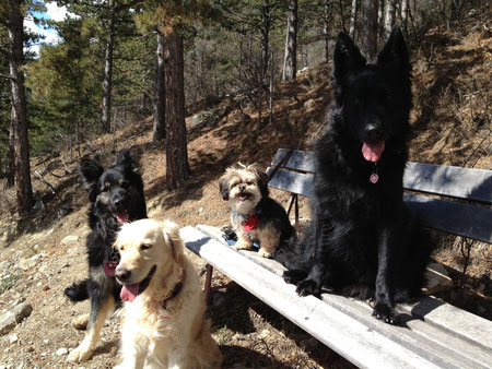 """...das Hunderudel im März 2013 mit """"Fulvio"""", unserem neuen Rudelmitglied!"""