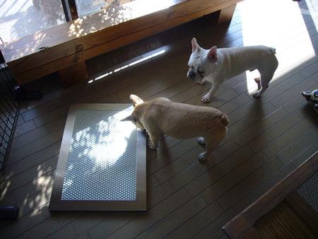 シンプルでスタイリッシュなデザインの犬用ステンレス製トイレ・トレイ