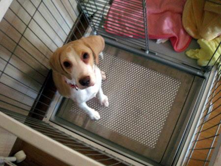 タルちゃんと特注サイズの犬用ステンレス製トイレ・トレイ