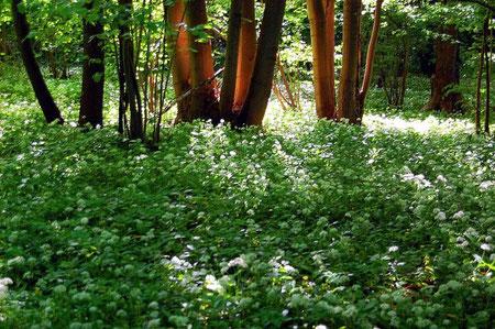 Waldwahrheit