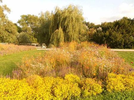 Blumenwiese mit altem Baum
