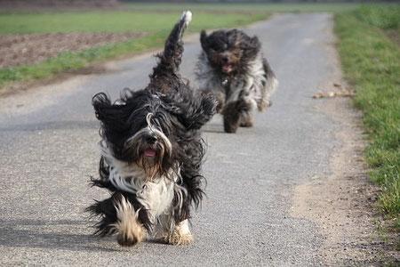 Doesenrennen!