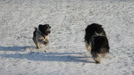 ....mit Monty kann ich super nachlaufen spielen!