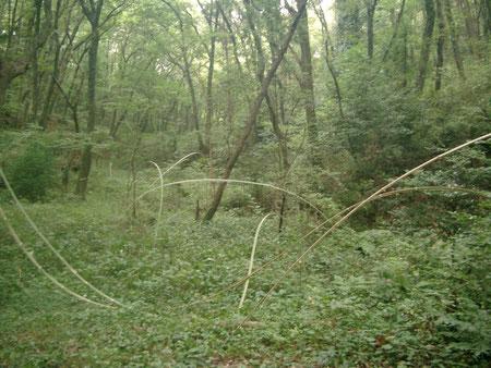 風のように 素材:割った竹 長さ60mほど 谷間に制作 国際野外の表現展2010比企にて