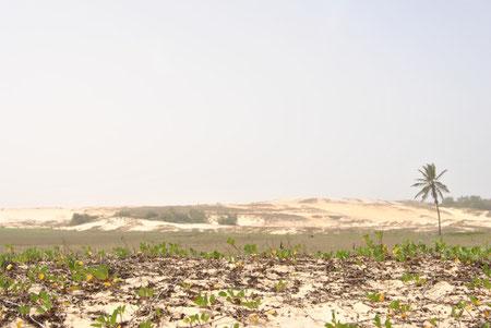 paysage avant la plage