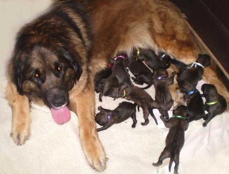 Unsere Bella war eine stolze Mutter