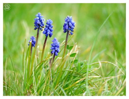 nature fleur bleu fête  maman hommage sagesse terre-mère