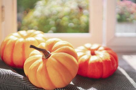 一面のクローバー。リボンでまとめられたシロツメグサの花。