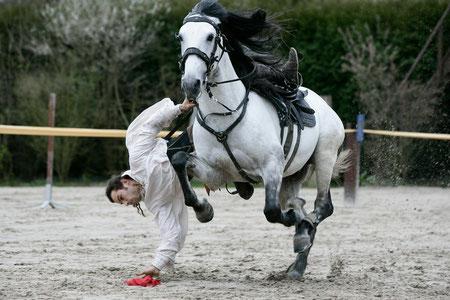 Stage de perfectionnement cheval