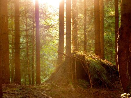 zu Hause im Wald