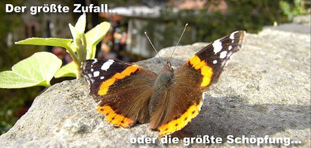 2010-02 Copyright Gerhard Bachor