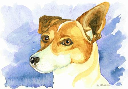 portrait d'un Jack Russel