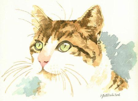 chat tigré aux yeux verts peint en aquarelle