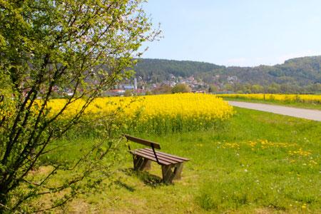 Endlich Frühjahr  -  Bad Bocklet umgeben von blühenden Rapsfeldern!