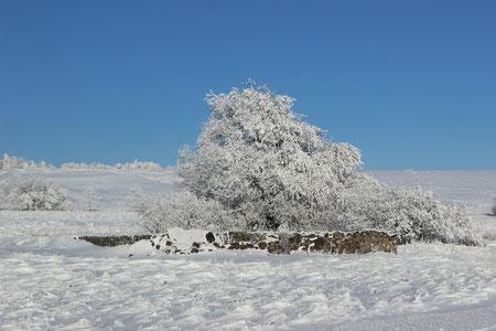 Einzigartige Winterlandschaft