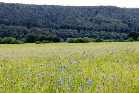 Herrliche Blumenwiesen und Mischwälder laden zum Erholen ein!