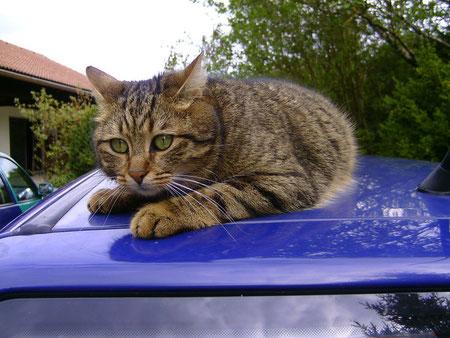 Gizmo liebt Autos