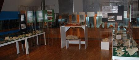 Fossilien-Ausstellung im Obergeschoß des Dümmer-Museum