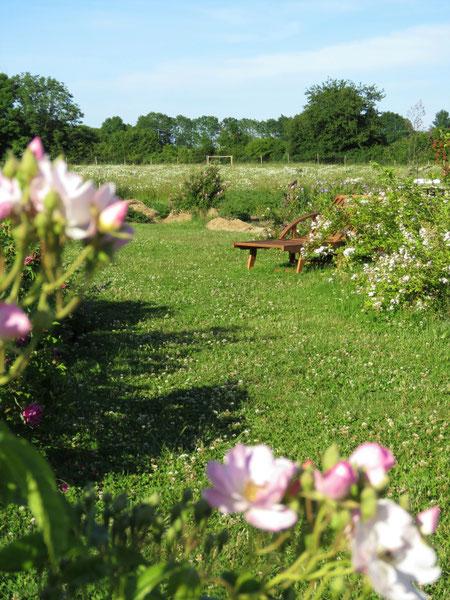 In der Naturgarten-Rosenschule