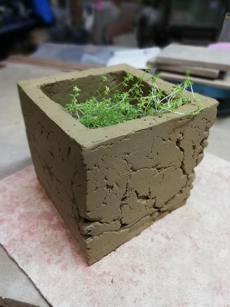 陶芸家 ブログ 焼き物 陶芸作品 茨城県笠間市 鉢植え 陶器 土味 植物 植木鉢