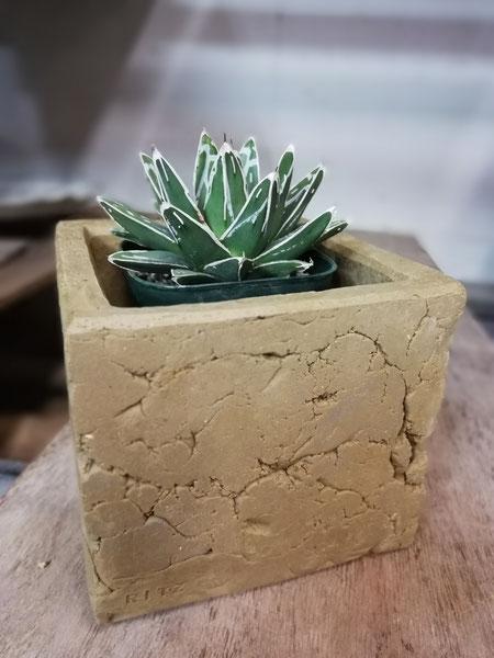 陶芸家 ブログ 焼き物 陶芸作品 茨城県笠間市 鉢植え 陶器 土味 アガベ 笹の雪 植木鉢