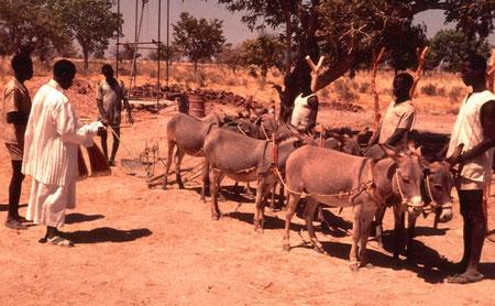 Abbé Jean-Paul segnet ein sechsköpfiges Eselgespann