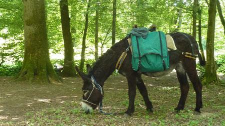 26. und 27. Juni 2010: Wanderung mit Paula und den Ieselfrënn Letzebuerg durch das Tal der 7 Schlösser