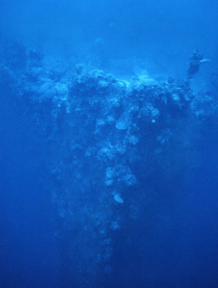 The coral-encrusted bow of a sunken munitions vessel settled nearly upright on the bottom in 40 meters of water; Palau.