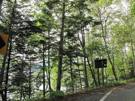 8:04 然別湖横を通る。非常に狭い道だが雰囲気抜群