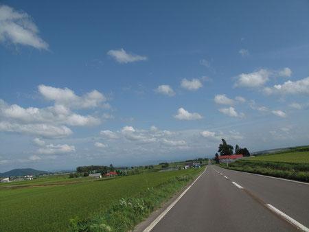 旭川市郊外に。。もう稲の穂が垂れている。。