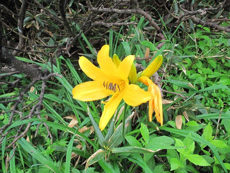 花の名は分らないが時折見掛ける美しいものに立ち止まるのであった