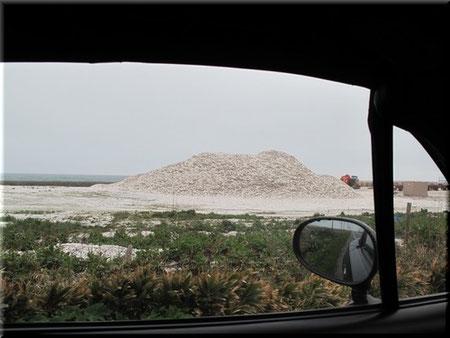 ■ホタテの貝殻の山 AM6:22