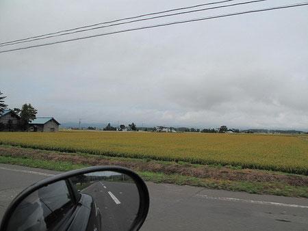 8:21 おいおい、もう稲穂は黄金色になってきているよ・・秋だなあ・・・・・