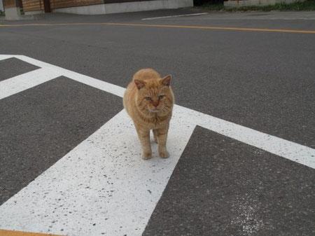 5:12 滝の駐車場にいた名物の猫。ナーゴナーゴ鳴いて近づいて来る。オスだ。凄い存在感。